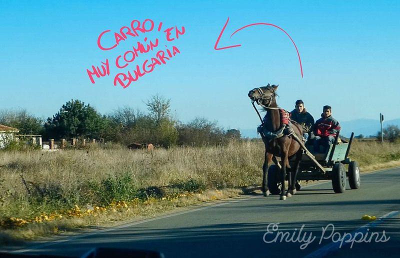 conducir-bulgaria-carro-caballo