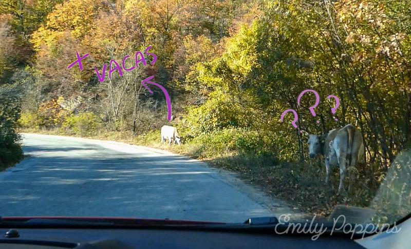 animales-carretera-bulgaria